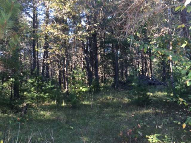 ON Forest Dr #Lot 223, Minocqua, WI 54548