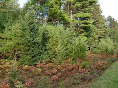 Photo of ON Spruce Meadows Ln #Lot 11, Land O Lakes, WI 54540