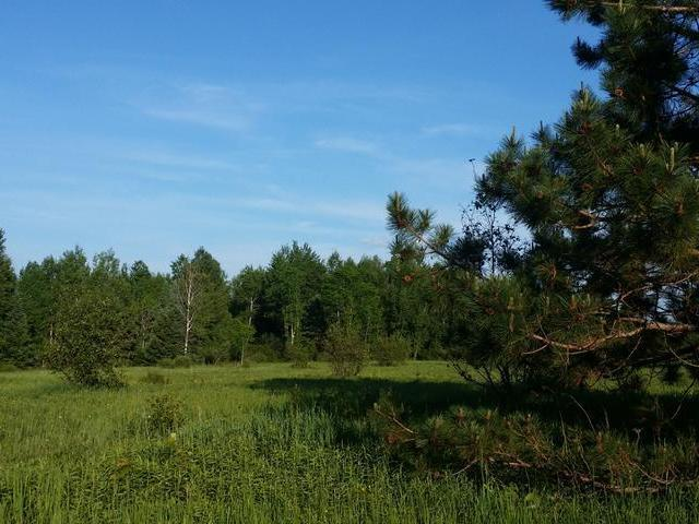 22 acres Cth T, Tomahawk, WI 54487