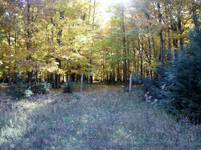 ON Connors Rd #Lot 20, Three Lakes, WI 54562