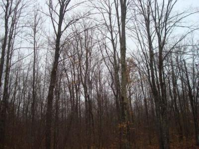 Photo of ON Diamond Roof Rd, Laona, WI 54409