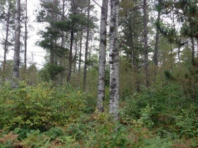 Photo of Lot 32 Pine Pl, St Germain, WI 54558