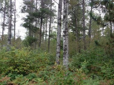 Lot 32 Pine Pl, St Germain, WI 54558