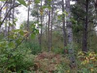 Lot 34 Pine Pl, St Germain, WI 54558