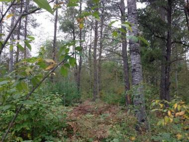 Lot 34 Pine Pl, St Germain, WI 54558