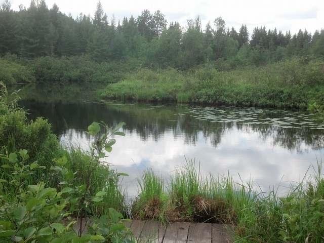 ON Lakeshore Dr, Pine Lake, WI 54501