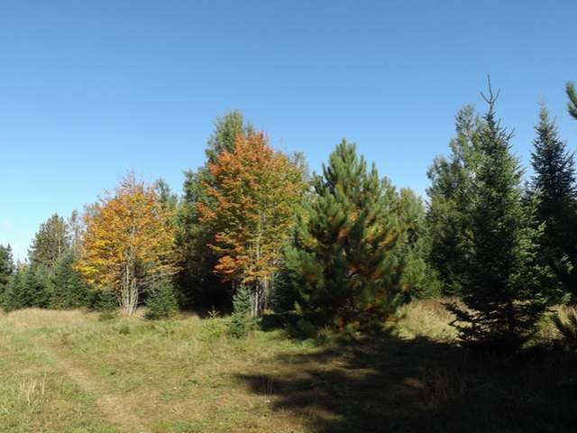 ON Hwy 17 #65 Acres, Sugar Camp, WI 54521
