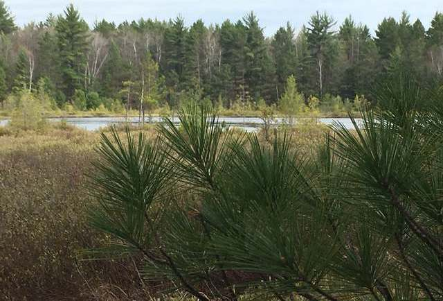 Off Dollar Ln #Lot #23, Land O Lakes, WI 54540