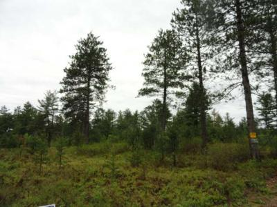 Photo of Off Birch Spring Rd #Lot 5, Plum Lake, WI 54560