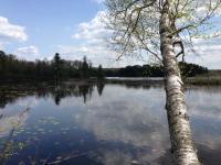 3166 Oneida Lake Rd, Harshaw, WI 54529