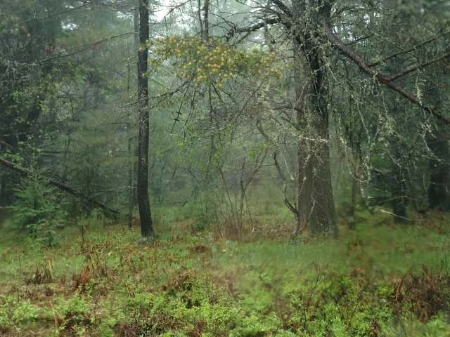ON Timber Trail Ln, Land O Lakes, WI 54540