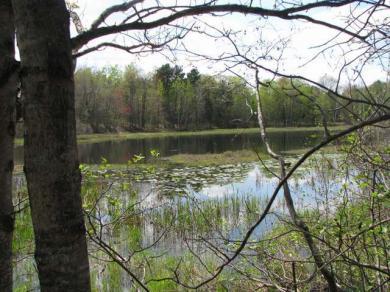 Lot 8 Oneida Farms Rd, Three Lakes, WI 54562