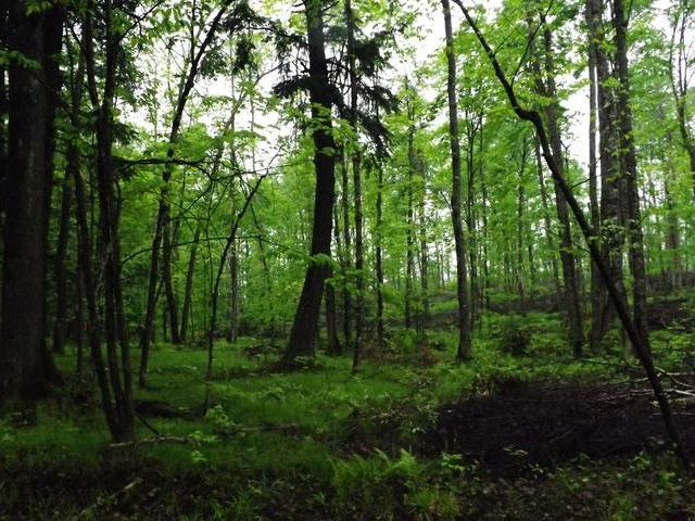 ON Military Rd #Lot 2, Eagle River, WI 54521