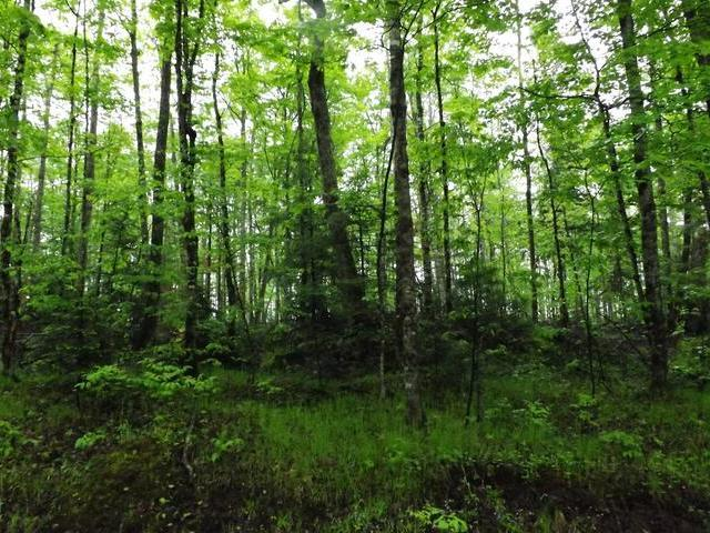 ON Military Rd #Lot 4, Eagle River, WI 54521