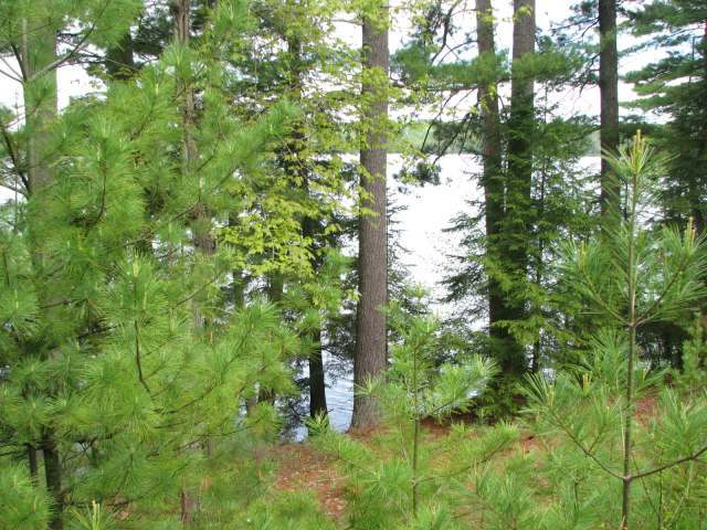 near7969 Four Mile Lake Rd, Three Lakes, WI 54562