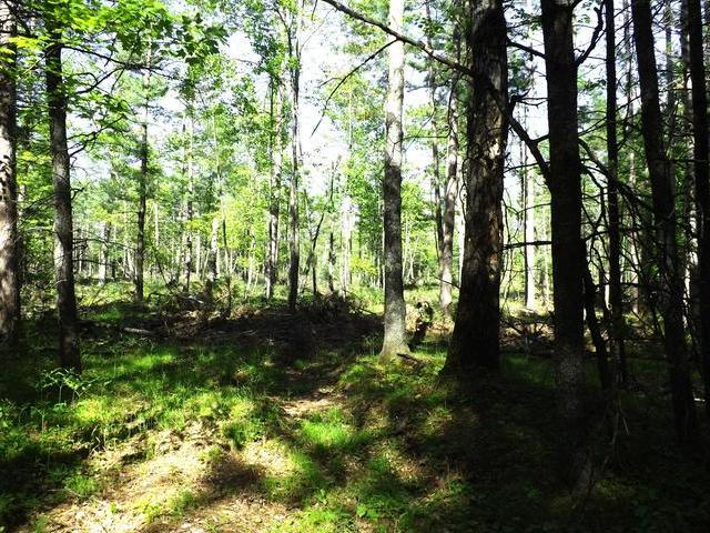 ON Zeman Rd #37.5 Ac, Eagle River, WI 54521