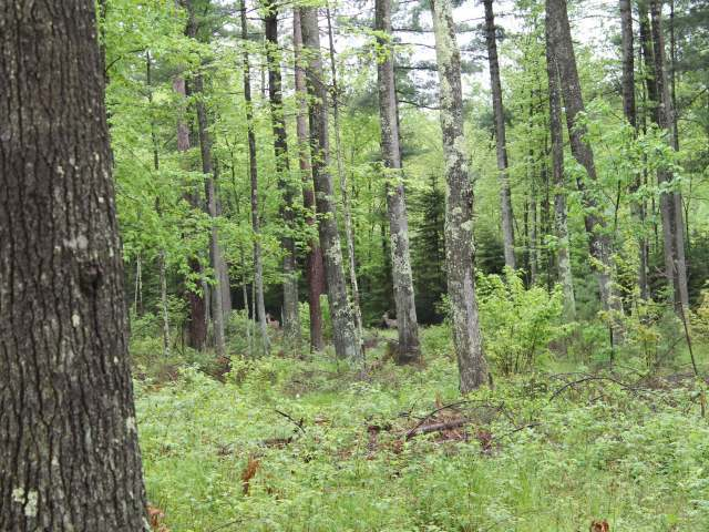 6 on Sunny Point Rd, Tomahawk, WI 54487