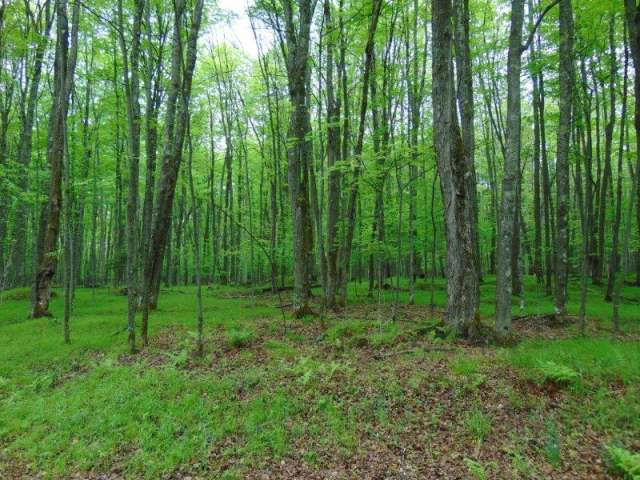Lot # 18 Red Fox Rd, Presque Isle, WI 54547