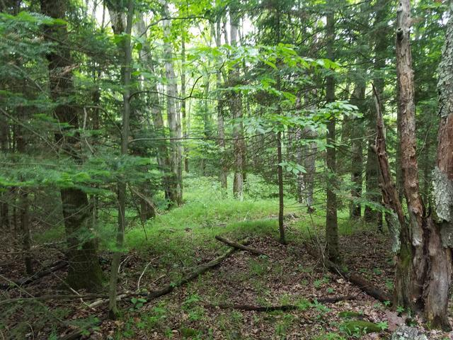 Lot 1 Sanctuary Rd, Tomahawk, WI 54487