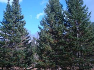 Photo of NEAR South Pine Rd, Rhinelander, WI 54501