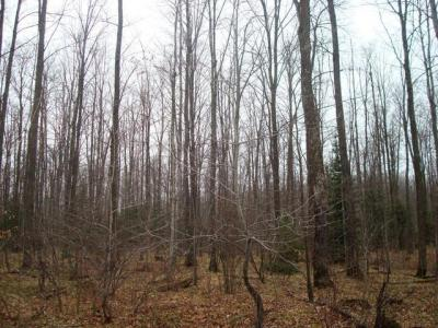 Photo of ON Diamond Roof Rd, Wolf River, WI 54409
