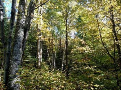 Off Bare Acres Ln, Phillips, WI 54555