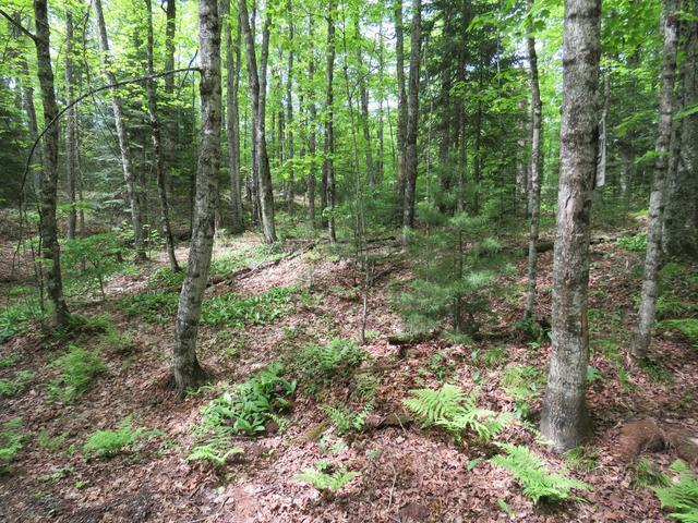 ON Stager Lake Rd #15 Acres, Crystal Falls, MI 49920