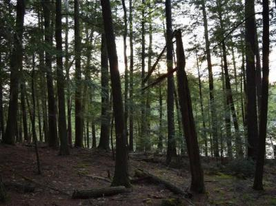 Photo of ON C W Smith Rd #Lot 24, Three Lakes, WI 54562