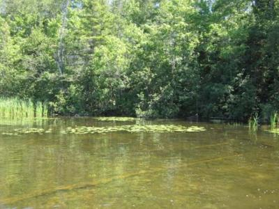 Photo of Lot 3 Briggs Ln, Phelps, WI 54554