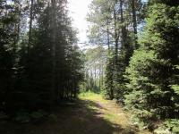 Lot 22 Dyer Rd #Lot 22, Lincoln, WI 54521