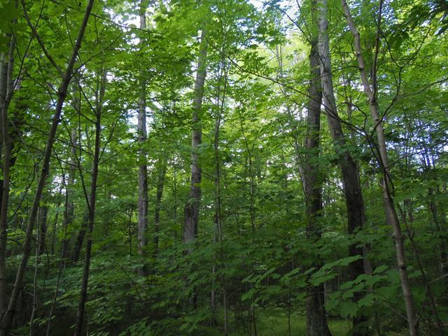 5.7 Acre Eagle Waters Rd, Tomahawk, WI 54487