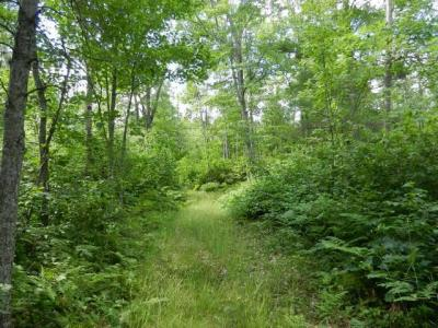 Photo of ON Browns Rd, Three Lakes, WI 54562