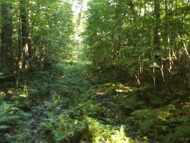 36+ Acre Jungle Lake Rd, Crandon, WI 54520
