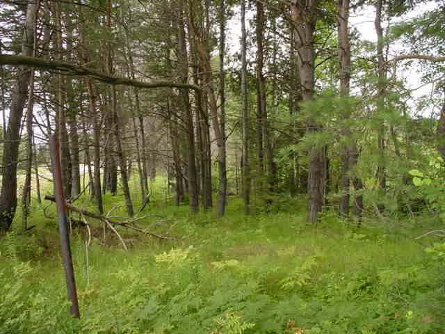 ON Prairie Tr, Rhinelander, WI 54501