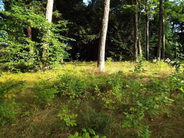 Lot 2 Enterprise Lake Rd, Elcho, WI 54428