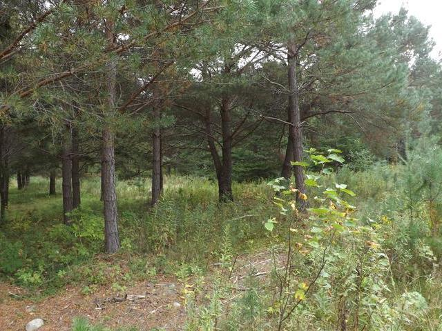 ON Garden View Ln #Lot 9, Phelps, WI 54554