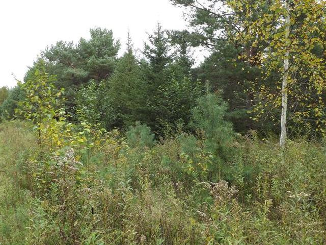 ON Garden View Ln #Lot 8, Phelps, WI 54554