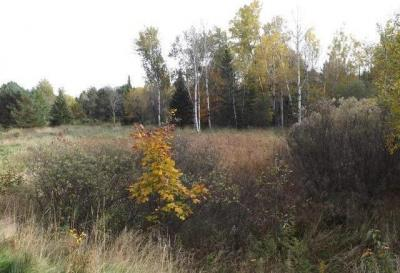 Photo of ON Garden View Ln #Lot 10, Phelps, WI 54554