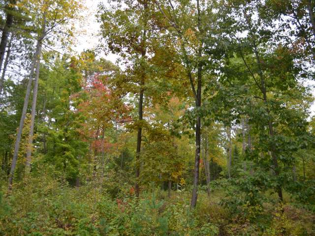 ON Koth Rd, Tomahawk, WI 54487