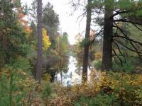10+ ac. Cedar Falls Rd, Hazelhurst, WI 54531
