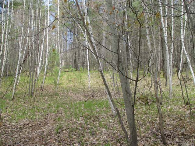 ON Birchwood Cr #Lot 3, Minocqua, WI 54548
