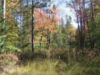 Photo of Off 45 N Hwy 45, Conover, WI 54519