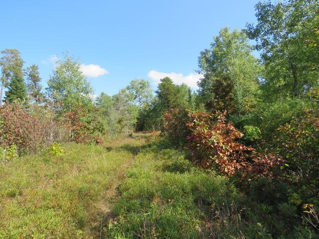 ON Little Portage Lake Rd #40 Acres, Land O Lakes, WI 54540