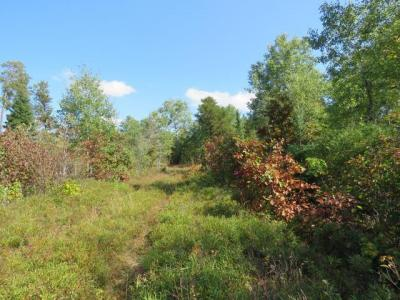 Photo of ON Little Portage Lake Rd #40 Acres, Land O Lakes, WI 54540