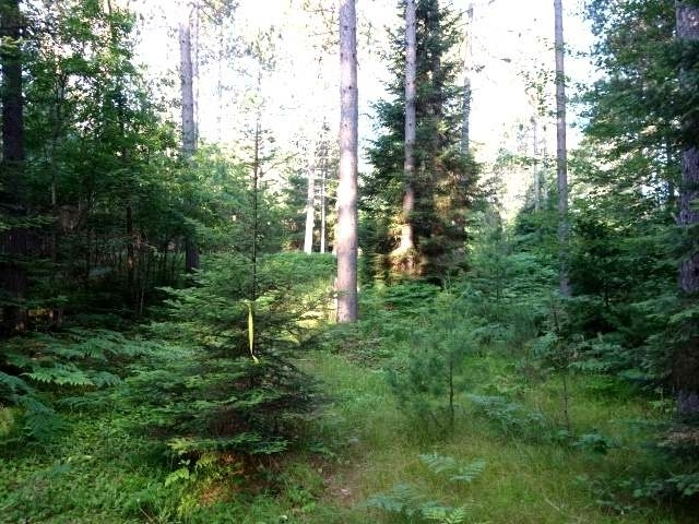 Lot 1&3 Curtis Lake Dr, Minocqua, WI 54548