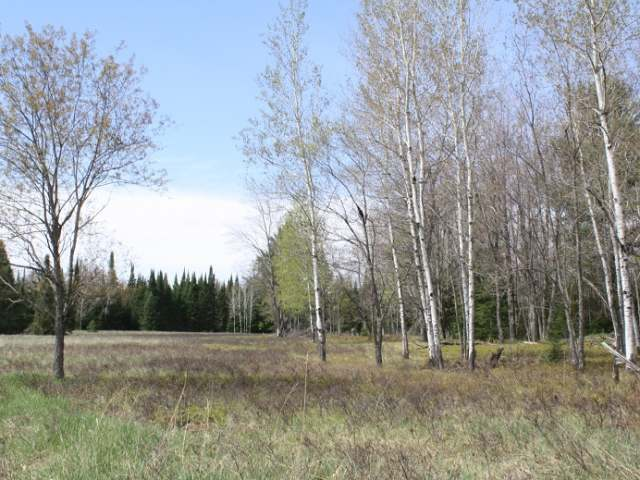 ON Cth G, Eagle River, WI 54521