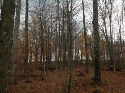 Photo of ON Winkler Rd #Lot 2, Three Lakes, WI 54562