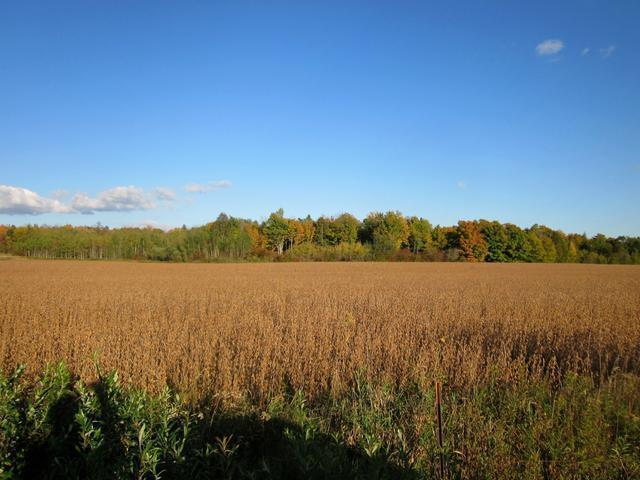 20 Acres Hay Meadow Dr, Gleason, WI 54435