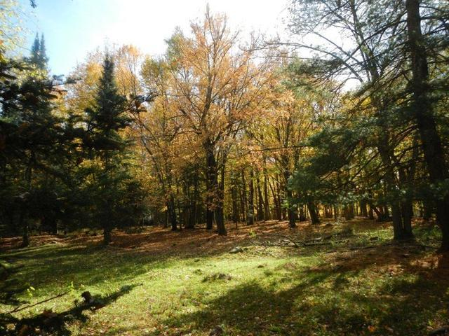 ON Pine Ln, Phillips, WI 54555