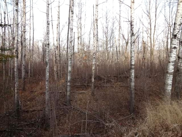 PARCEL D Big Buck Rd, Lake Tomahawk, WI 54539